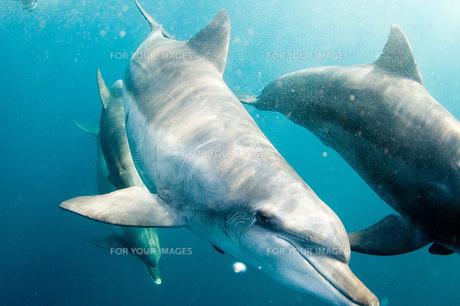 イルカの写真素材 [FYI00449403]