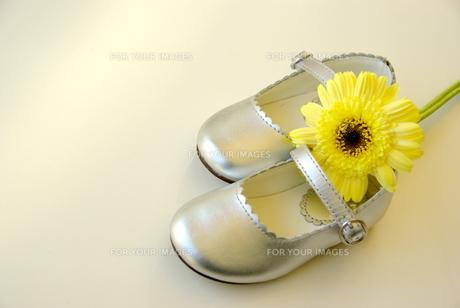 子供靴と黄色いガーベラの素材 [FYI00449431]