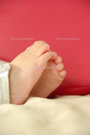 赤ちゃんの足の写真素材 [FYI00449433]