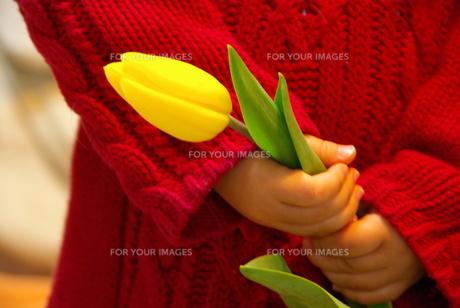 黄色いチューリップを持つ女の子の写真素材 [FYI00449448]