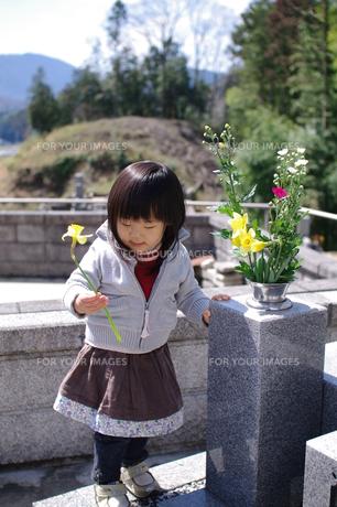 お墓参りをする女の子の写真素材 [FYI00449462]