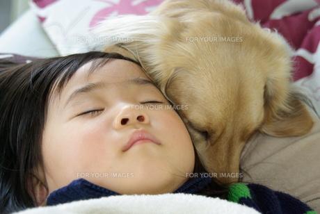 愛犬と眠る女の子の写真素材 [FYI00449465]