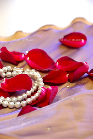 真珠とバラの花びらの写真素材 [FYI00449468]