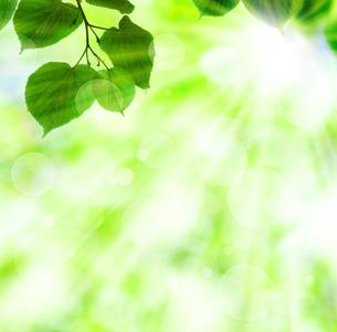 新緑と木漏れ日の写真素材 [FYI00449560]