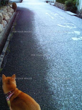朝、雪みちの写真素材 [FYI00449625]
