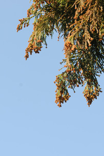 花粉の写真素材 [FYI00449979]