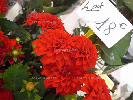 パリのお花屋さんの写真素材 [FYI00451111]
