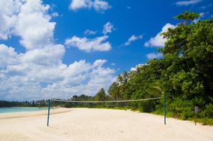 ビーチとヤシの木の写真素材 [FYI00451385]