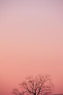 冬のイメージ 木立と夕景 の素材 [FYI00451482]