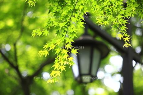 新緑のイメージの素材 [FYI00451513]