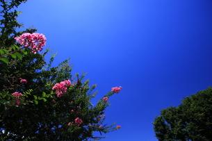 夏のイメージ 猿すべりの花の写真素材 [FYI00451665]