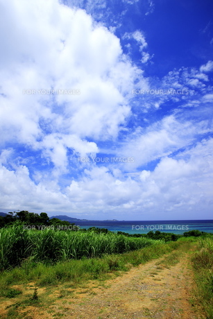 石垣島とさとうきび畑の素材 [FYI00451681]