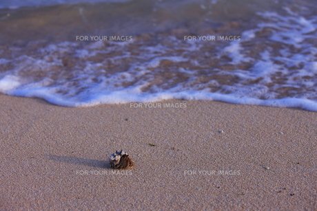 波照間島のヤドカリの写真素材 [FYI00451712]