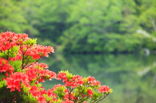 新緑の奥日光 湯ノ湖湖畔の写真素材 [FYI00451875]