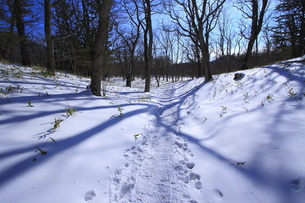 奥日光    冬の戦場ヶ原の写真素材 [FYI00451939]