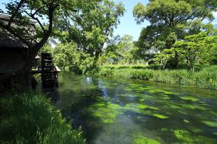 新緑の安曇野と水車小屋の素材 [FYI00451956]