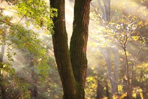 都会の秋 朝靄の木立の素材 [FYI00452048]