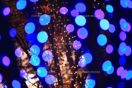 クリスマスイルミネーションの写真素材 [FYI00452084]