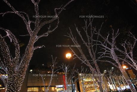 クリスマスイルミネーションの写真素材 [FYI00452135]