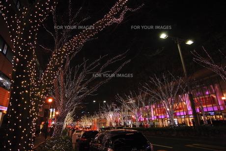 表参道  クリスマスイルミネーションの写真素材 [FYI00452151]