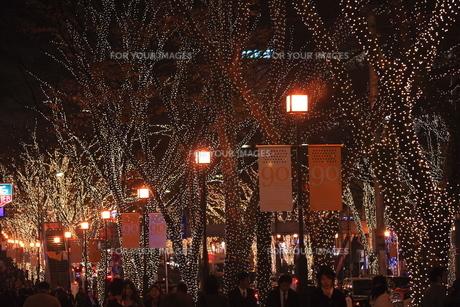 表参道  クリスマスイルミネーションの写真素材 [FYI00452155]