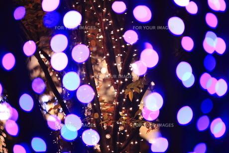 クリスマスイルミネーションの写真素材 [FYI00452158]