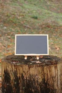 森のカフェの写真素材 [FYI00452417]
