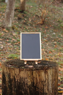 森のカフェの写真素材 [FYI00452434]