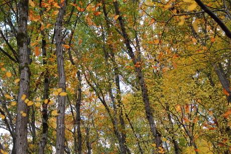 秋の雑木林の素材 [FYI00452438]