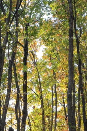 雑木林の紅葉の素材 [FYI00452441]