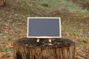森のカフェの写真素材 [FYI00452448]