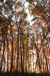 秋の雑木林の素材 [FYI00452483]