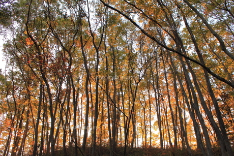 秋の雑木林の素材 [FYI00452492]