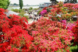 つつじが岡公園の写真素材 [FYI00452789]