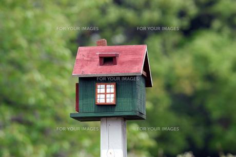 小鳥の巣箱の写真素材 [FYI00452977]