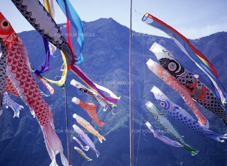 鯉のぼりの写真素材 [FYI00453011]