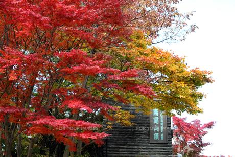 紅葉の高尾山山頂の写真素材 [FYI00453809]