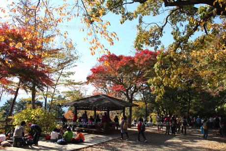 秋の高尾山山頂の写真素材 [FYI00453814]