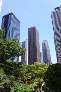 新宿高層ビル群の写真素材 [FYI00453905]