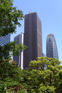 新宿高層ビル群の写真素材 [FYI00453932]