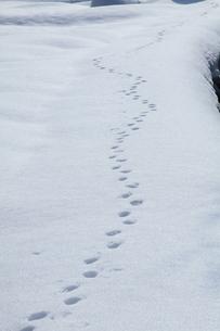 雪上の足跡の写真素材 [FYI00454111]