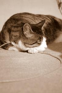 眠るネコの写真素材 [FYI00454186]