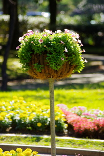 お花のグラスの写真素材 [FYI00454219]