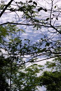 ジャングルの写真素材 [FYI00454240]