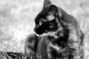 野良猫の写真素材 [FYI00454241]