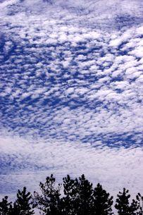 うろこ雲の写真素材 [FYI00454243]