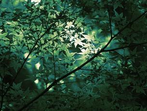 新緑の写真素材 [FYI00454276]
