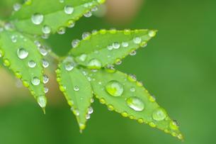 水滴の付いた葉の写真素材 [FYI00454778]