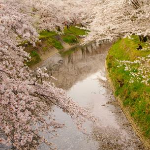 春色の写真素材 [FYI00454999]