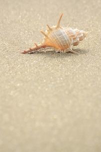 浜辺の写真素材 [FYI00455089]